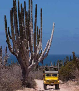 Camel and Desert Safari Adventure Cabo San Lucas
