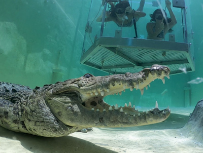 Croc Experience