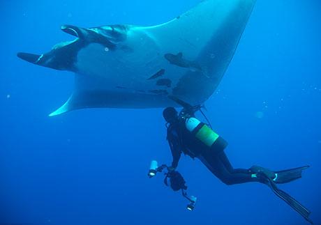 Nautilus Live-Aboard Diving