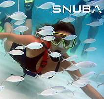 tours and activities Cabo San Lucas