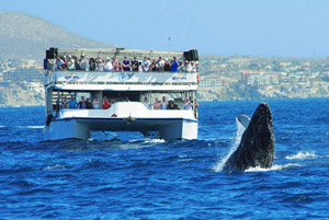 Cabo Escape Cruise Cabo San Lucas Mexico Whale Watching