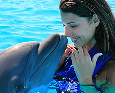 Swimming with dolphins tour