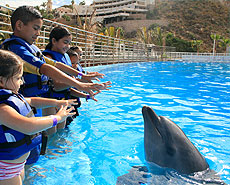 Dolphin greeting in Cabo San Lucas