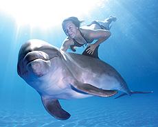 Underwater dolphin swimming