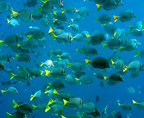 Diving Tours in Los Cabos Mexico