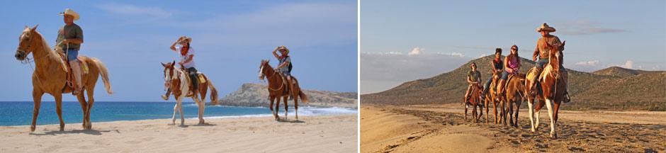 Cabo beach horseback riding tours