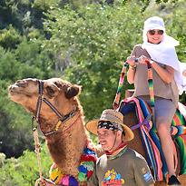 Wild Canyon Los Cabos Camel Tour