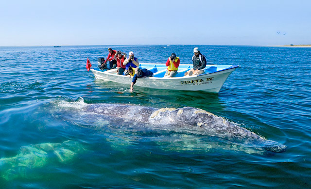 Whale Watching in the Sea of Cortez, Mexico