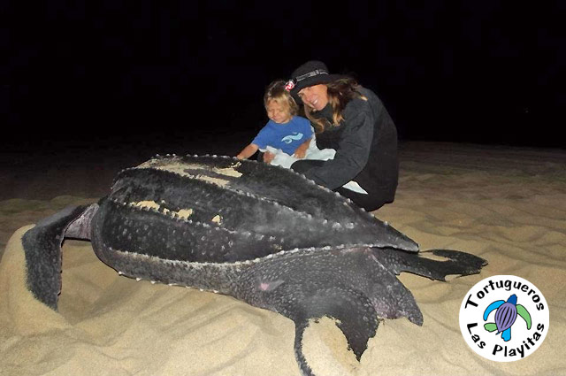 Sea Turtle Conservation in Los Cabos, Mexico